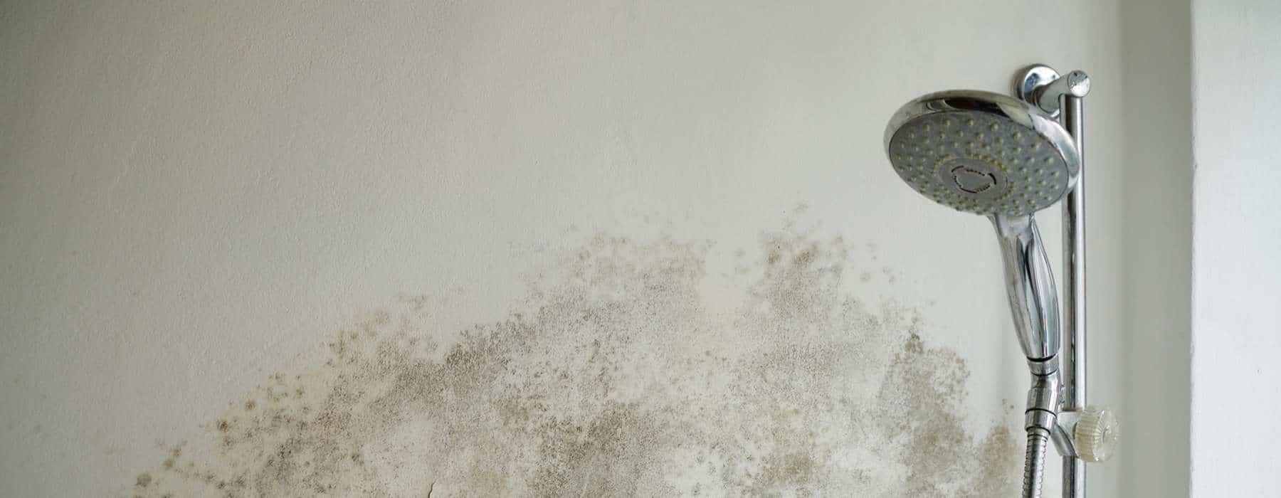 Enlever la moisissure dans une salle de bain mode d emploi - Enlever moisissure salle de bain bicarbonate ...